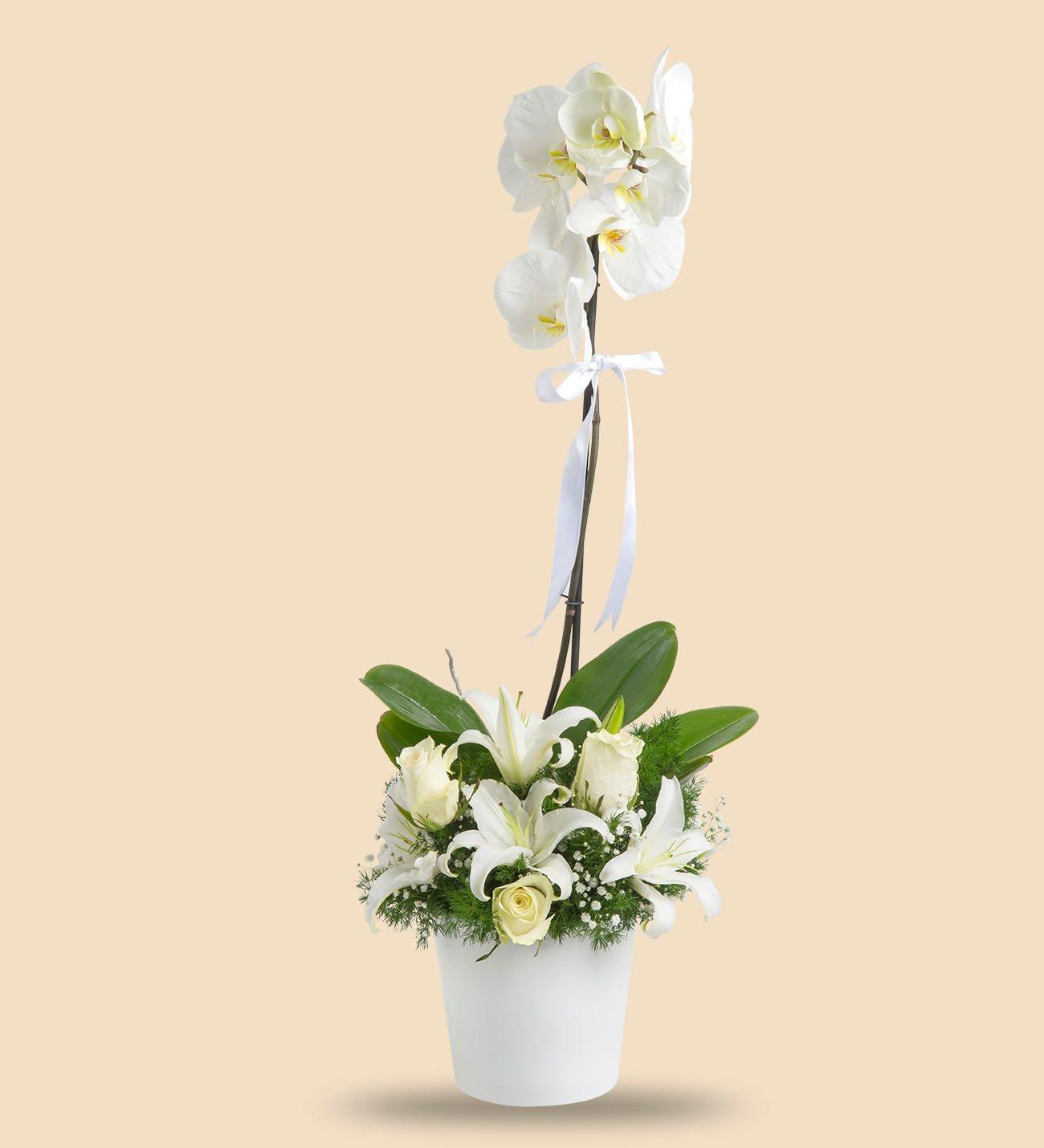 Orkide için ne tür bir gübre gereklidir